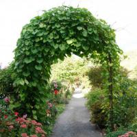 The Arch on the Bridge of Flowers